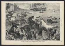 horses1869