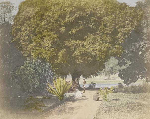 conservatory-barrackpore-park-_fiebie1851