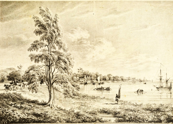 barrackpore-riverside-lipoo-tree_williamprinsep_1827