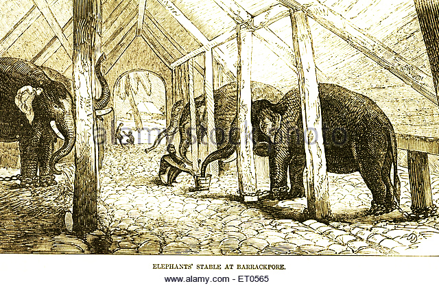 elephants-stable-at-barrackpore