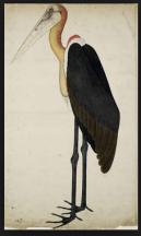 Haunaville বাতাসি. Watercolor on paper. Company School. 19th century. Inscribed: 'Martin'