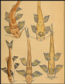 Fish. Calcutta Journal Of Natural History, 1841
