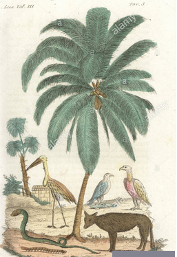 Coconut palm tree, jackal, adjutant stork, vulture, cobra, kite, and centipede of India. Handcoloured copperplate drawn and engraved by Andrea Bernieri after Francois Solvyns from Giulio Ferrario's Ancient and Modern Costumes of all the Peoples of the World, Florence, Italy, 1844.