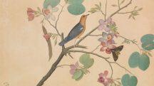Orange Headed Ground Thrush. by Shaikh Zain al–Din. Calcutta 1778