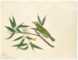 Bird. Painting Artist: Shaikh Zayn-al-din. 1778